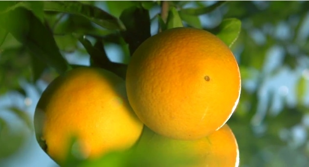 Naranja,