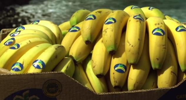 Plátano denominación de origen Plátano de Canarias.
