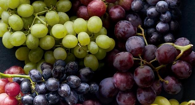Tierra de uvas