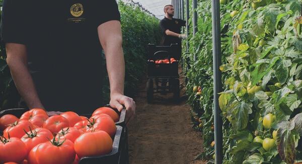Aquí sí hay tomate