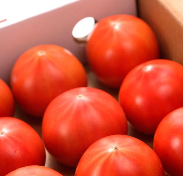 Ríndete al sabor del tomate más exclusivo: Amela
