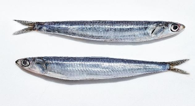 Boquerón, un pescado, muchos nombres